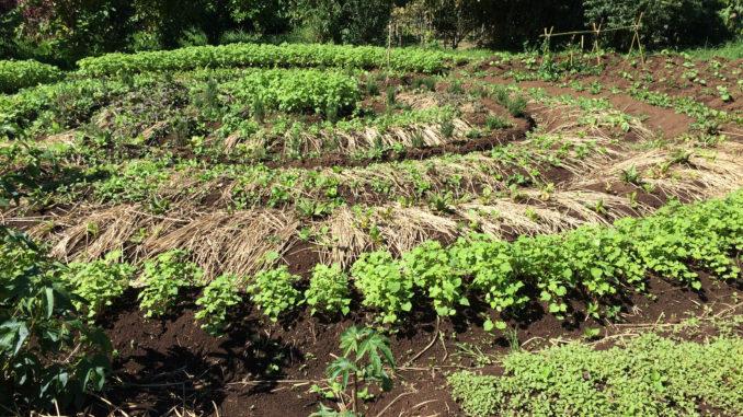 Costa Rica Y La Agroecología Una Práctica Cotidiana Por La Autonomía Revista La Agroecóloga